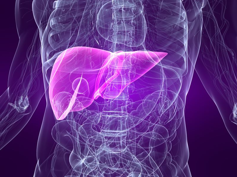 Liver in the human body _ PBC Foundation